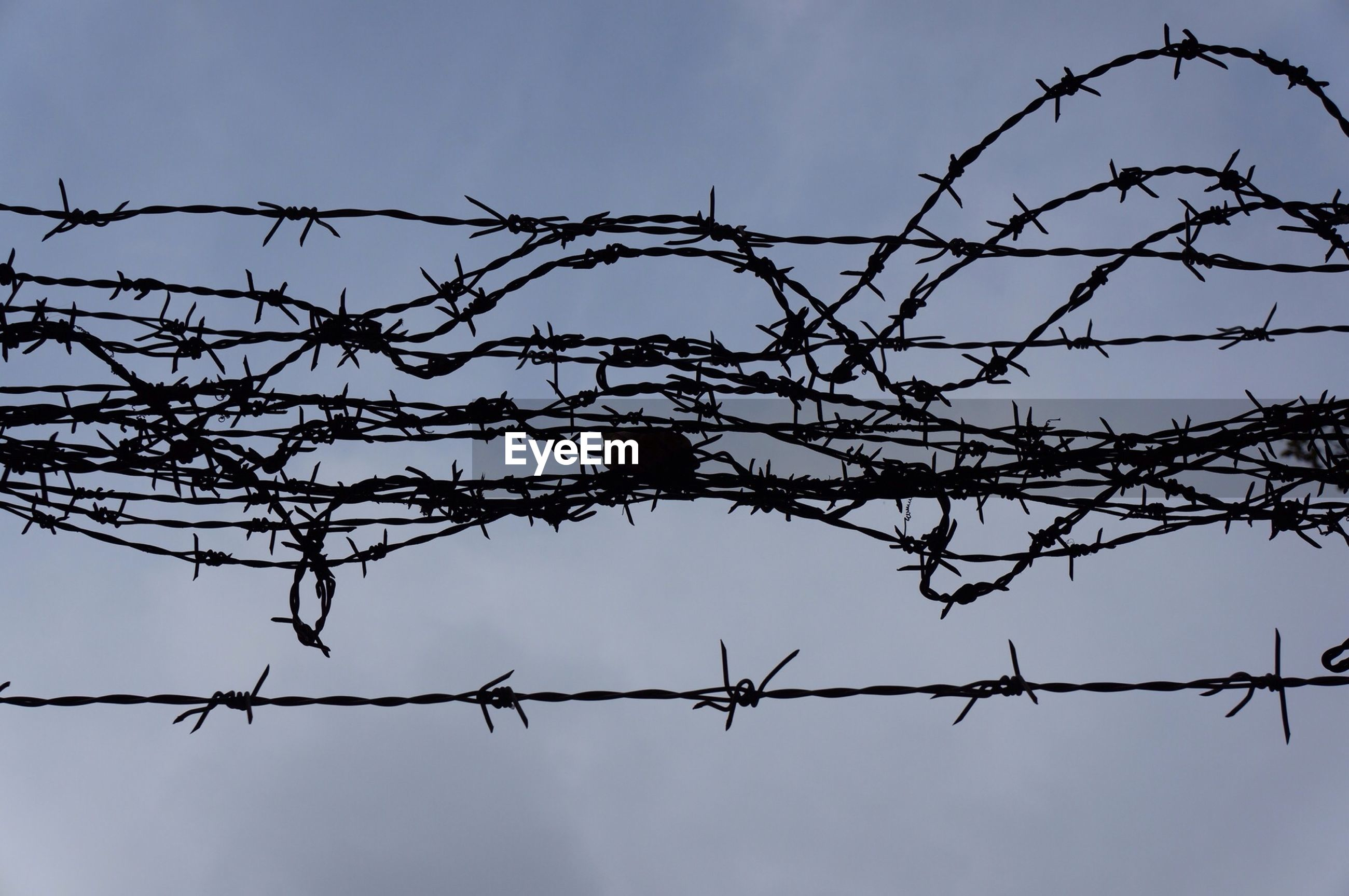 fence, protection, chainlink fence, safety, security, barbed wire, metal, low angle view, sky, clear sky, silhouette, metallic, focus on foreground, outdoors, nature, no people, connection, close-up, branch, forbidden