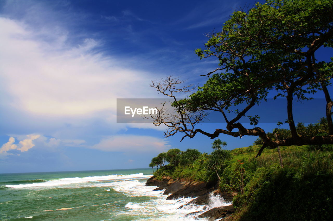 tree, sky, beauty in nature, nature, sea, scenics, no people, tranquil scene, tranquility, water, blue, day, outdoors, branch, cloud - sky, horizon over water