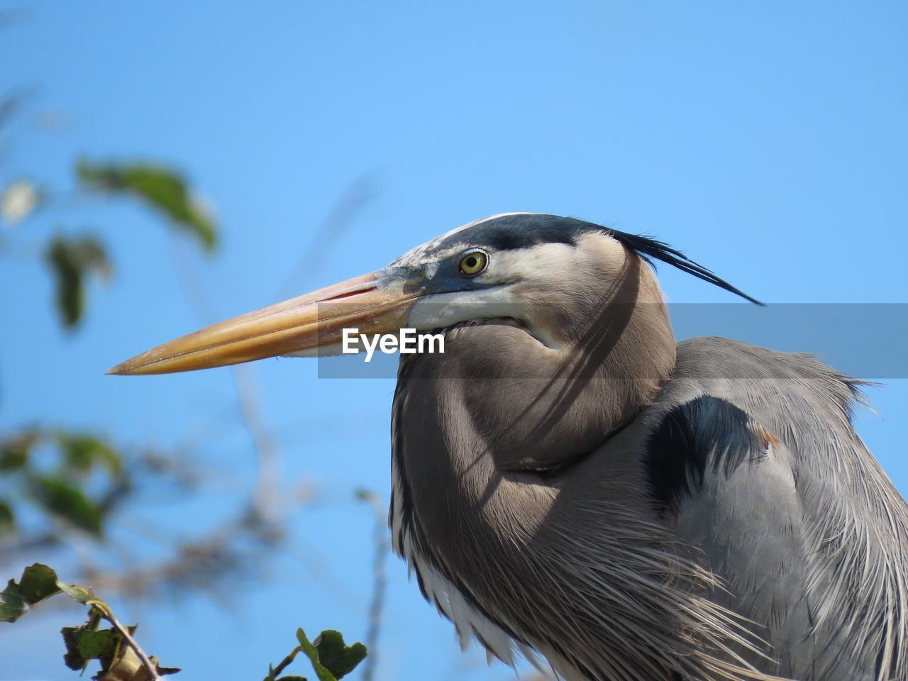 bird, vertebrate, animal themes, animal wildlife, animals in the wild, animal, one animal, focus on foreground, beak, nature, no people, heron, sky, day, close-up, water bird, low angle view, outdoors, blue, clear sky