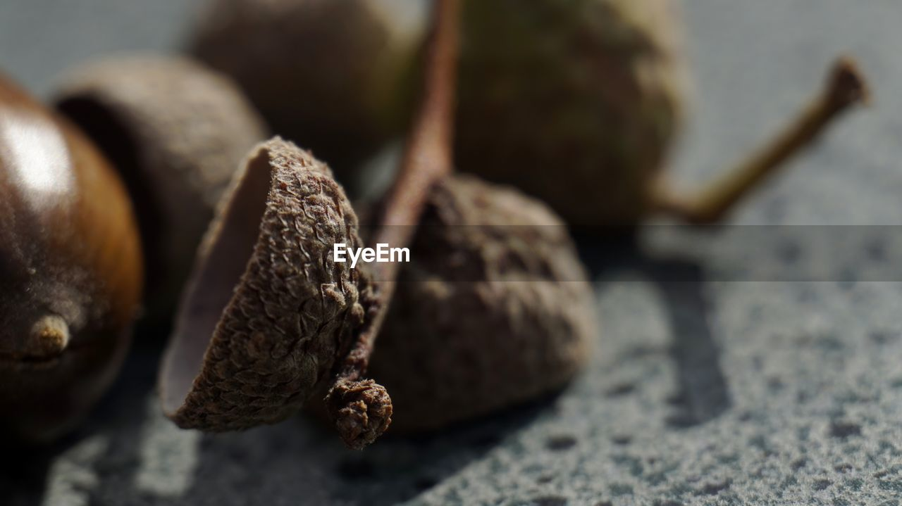 food and drink, food, close-up, healthy eating, wellbeing, selective focus, still life, no people, brown, freshness, nut, nut - food, fruit, nature, indoors, day, focus on foreground, table, acorn, chestnut