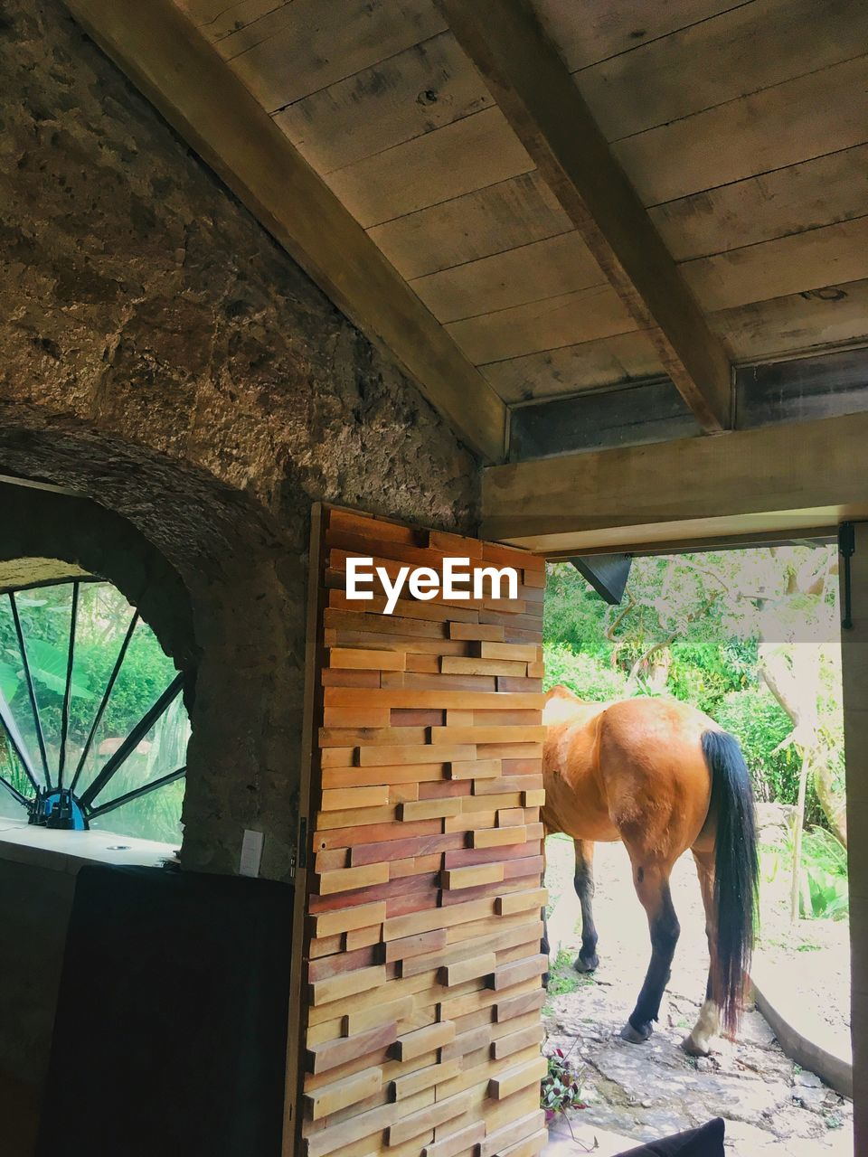animal themes, mammal, animal, one animal, domestic animals, domestic, pets, vertebrate, architecture, built structure, day, livestock, standing, horse, no people, animal wildlife, wood - material, stable, window, indoors, herbivorous