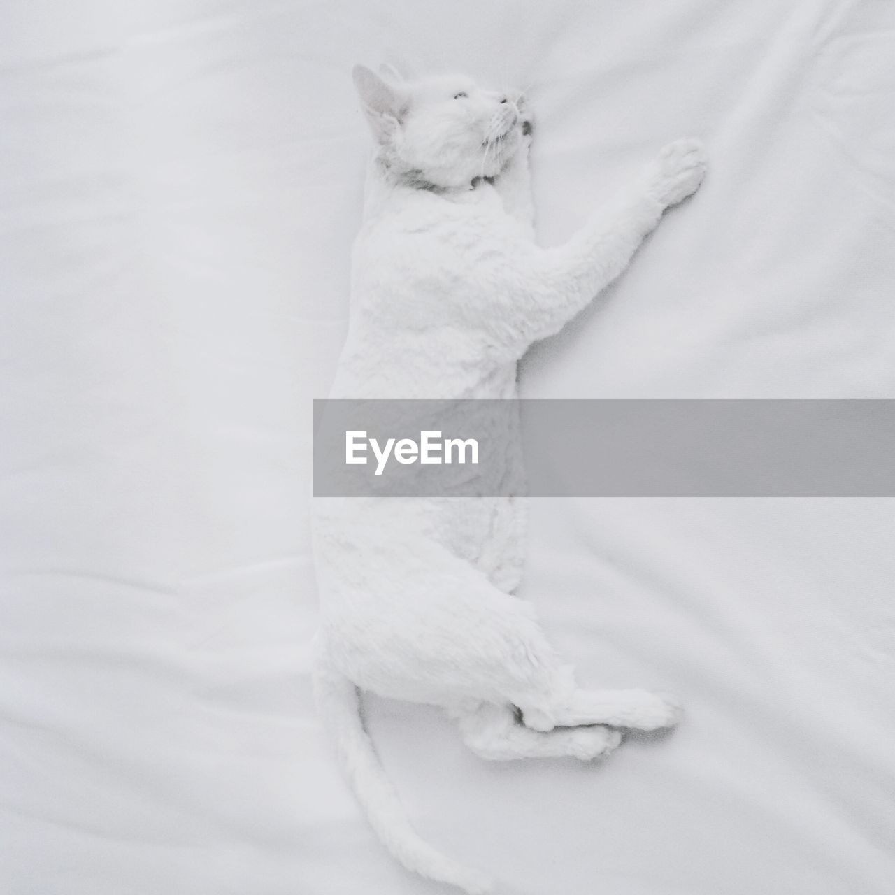 High angle view of white cat sleeping on bed