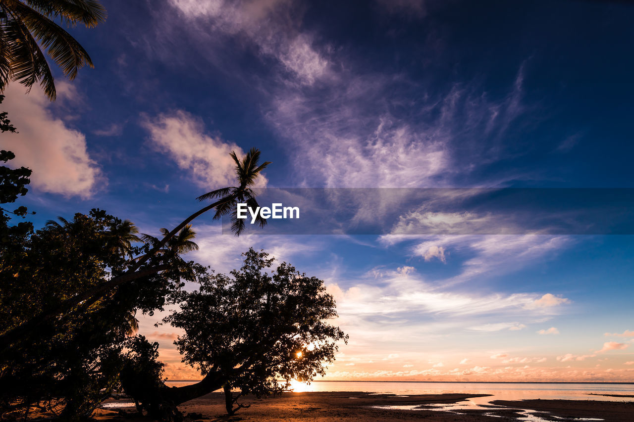 sky, cloud - sky, tree, beauty in nature, plant, sunset, tranquility, tranquil scene, scenics - nature, nature, no people, growth, land, water, low angle view, silhouette, palm tree, tropical climate, sea, outdoors, coconut palm tree