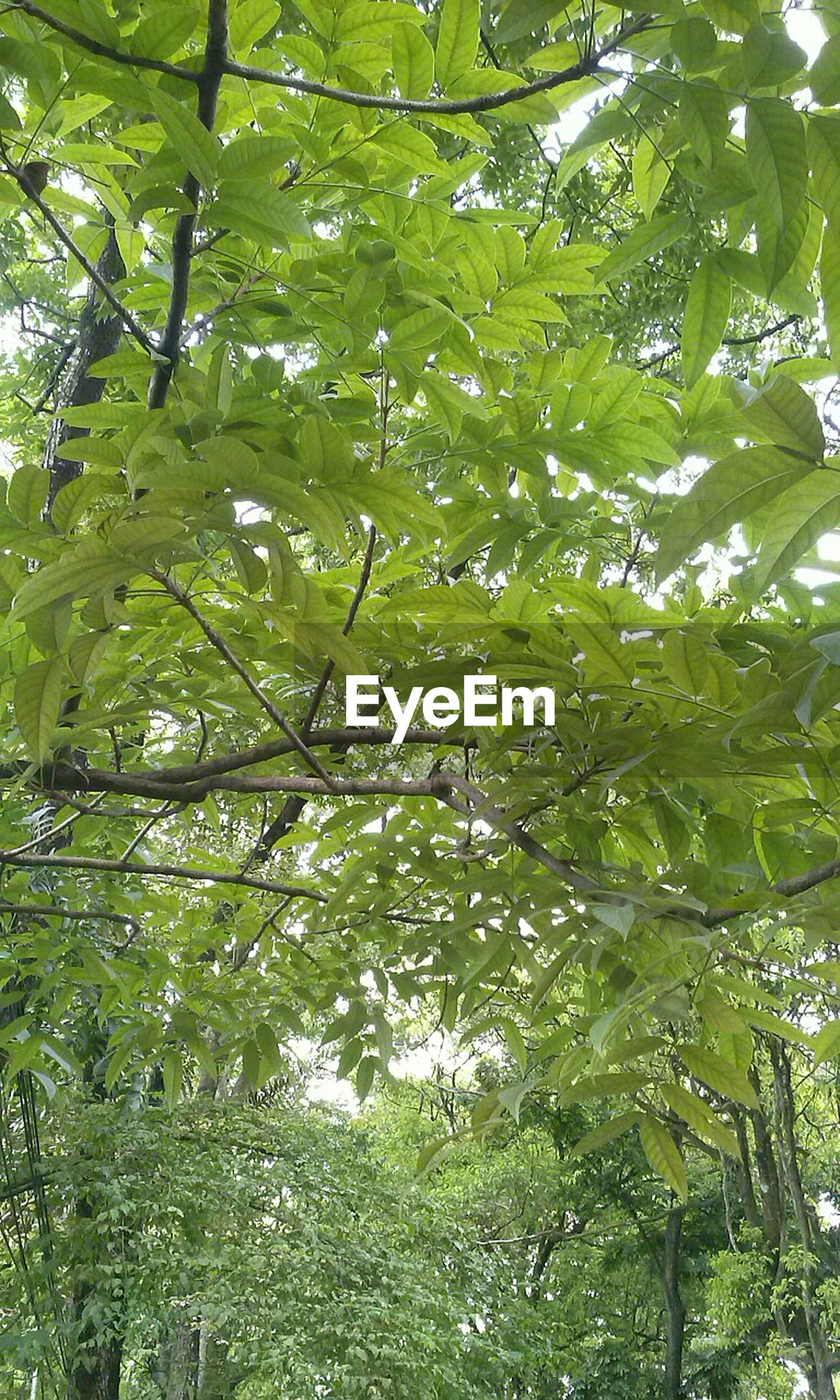 nature, green color, tree, backgrounds, growth, low angle view, full frame, beauty in nature, no people, leaf, day, outdoors, close-up, freshness