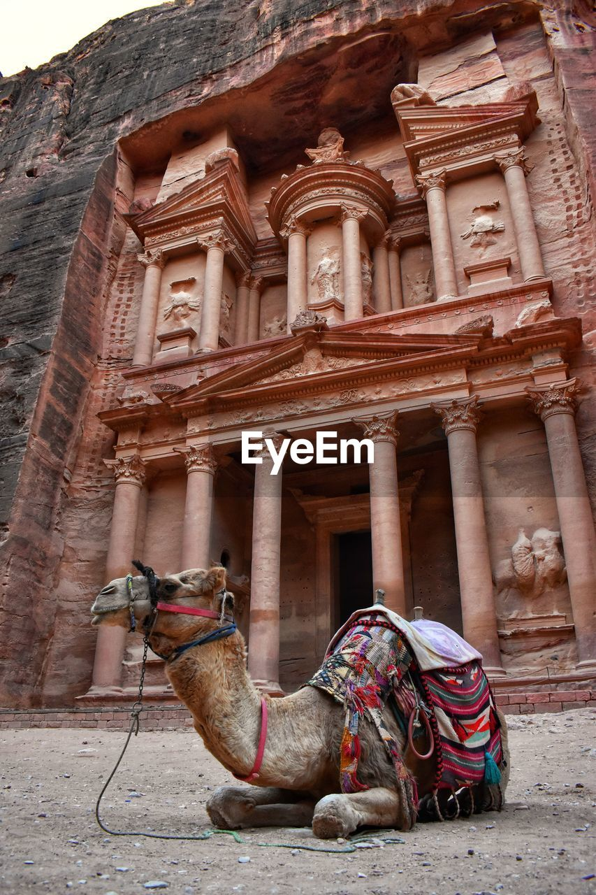 built structure, architecture, building exterior, mammal, building, day, domestic animals, animal themes, animal, domestic, history, pets, working animal, the past, camel, travel destinations, vertebrate, no people, one animal, architectural column, outdoors, archaeology, ancient civilization, herbivorous