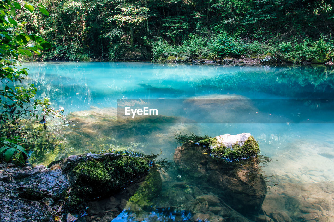water, beauty in nature, tree, plant, scenics - nature, rock, nature, tranquility, day, tranquil scene, no people, rock - object, solid, forest, idyllic, land, growth, non-urban scene, outdoors, turquoise colored, flowing, flowing water, power in nature, rainforest
