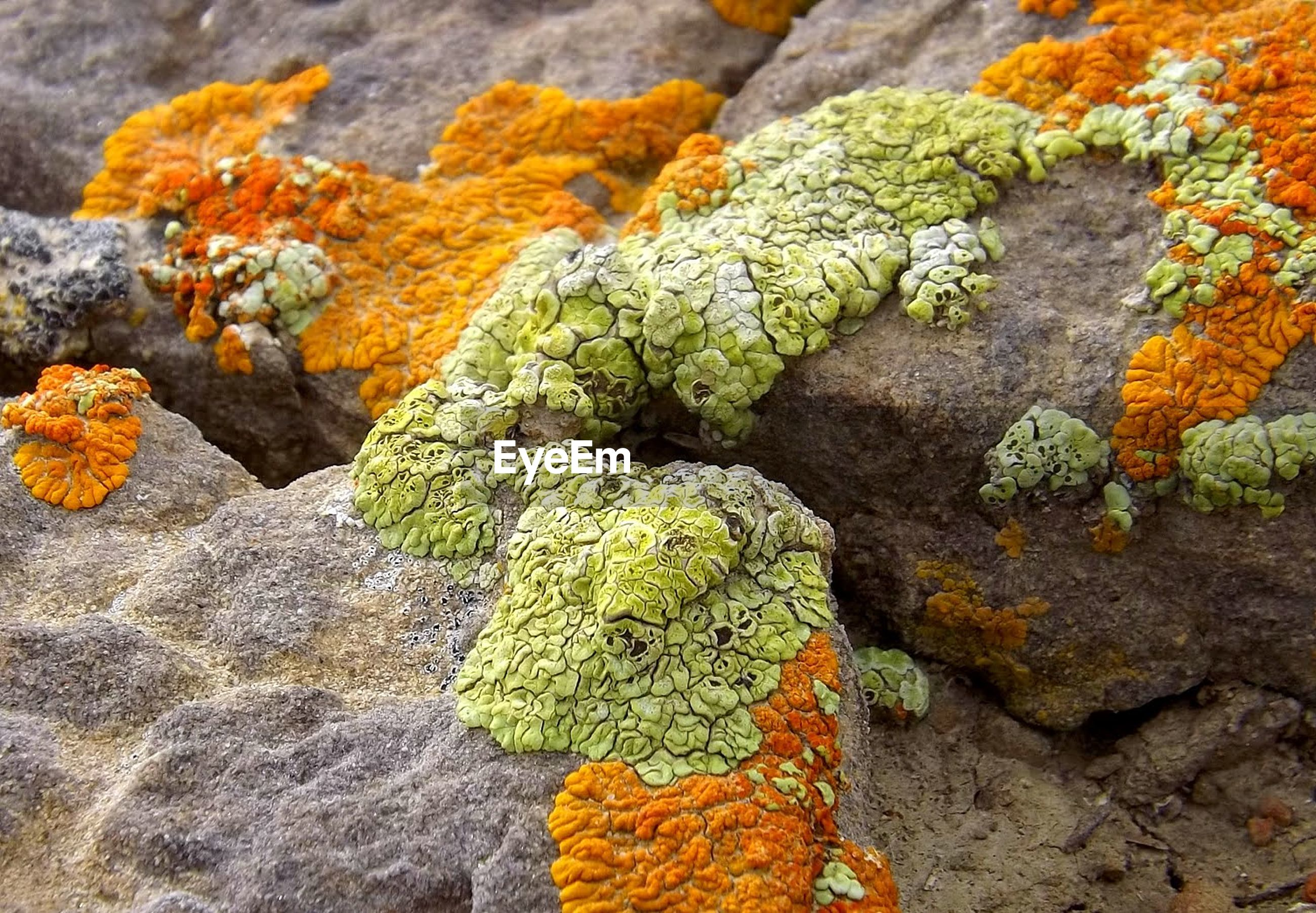 no people, close-up, plant, food, vegetable, healthy eating, food and drink, freshness, green color, full frame, flower, orange color, nature, multi colored, solid, flowering plant, wellbeing, day, indoors, lichen