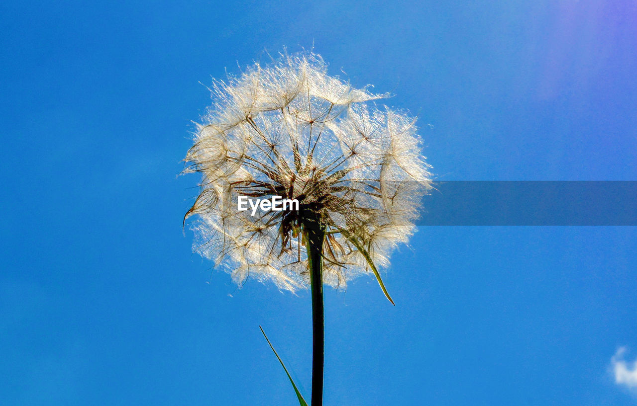Low Angle View Of Flower Against Blue Sky