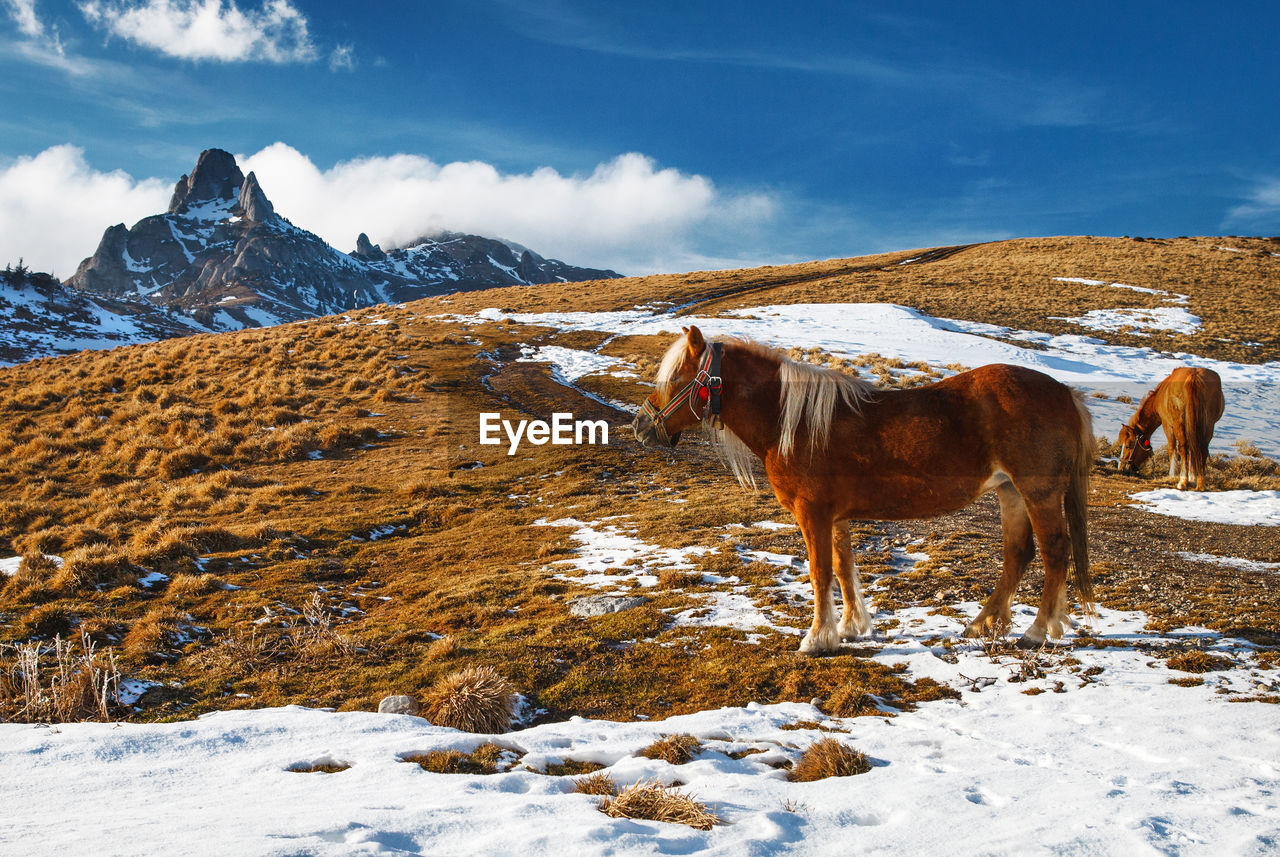 Horses On Snow Covered Field Against Sky