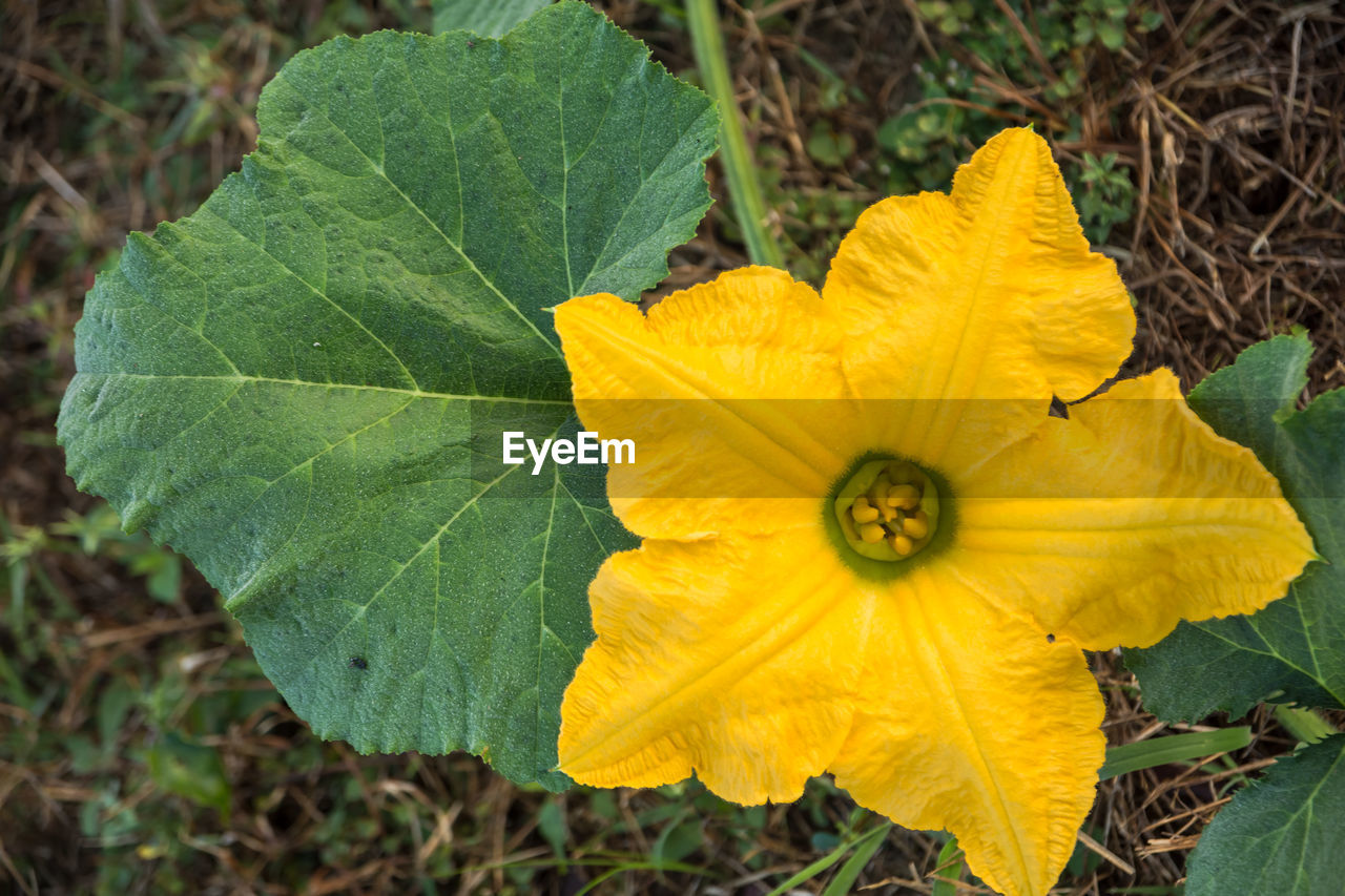 leaf, flower, petal, fragility, plant, yellow, freshness, nature, flower head, close-up, beauty in nature, day, growth, outdoors, green color, no people