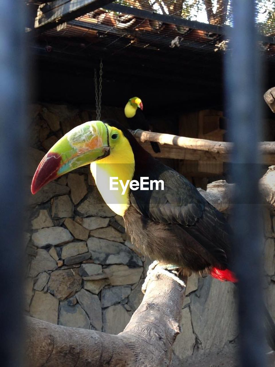 bird, animal themes, animals in the wild, parrot, perching, day, one animal, outdoors, animal wildlife, macaw, beak, human hand, close-up, gold and blue macaw, nature, people
