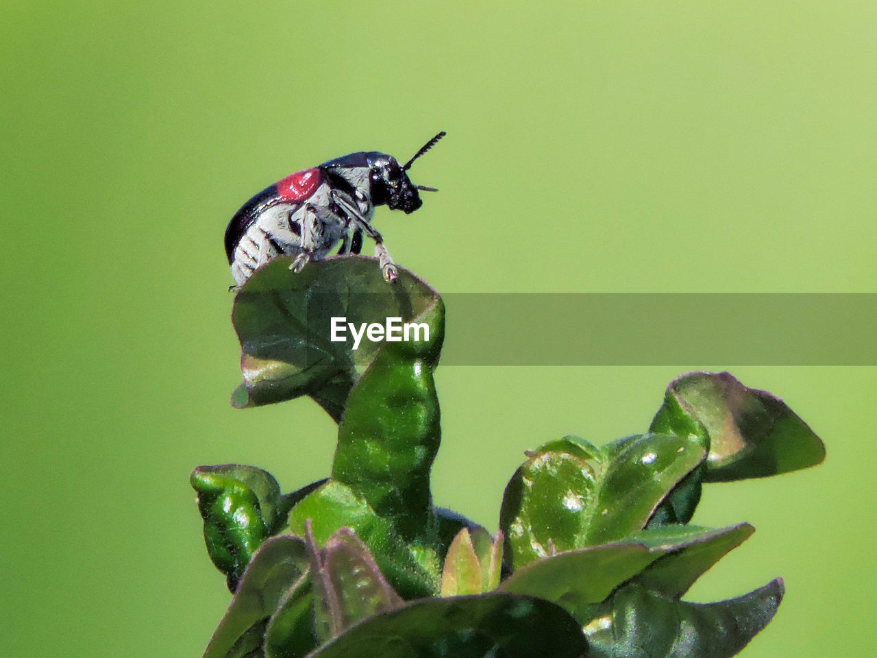Close-up of beetle on plant