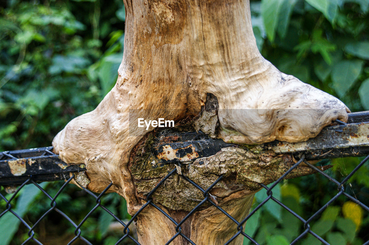 focus on foreground, tree, day, fence, boundary, nature, barrier, no people, plant, metal, protection, security, close-up, tree trunk, safety, trunk, land, outdoors, forest, chainlink fence