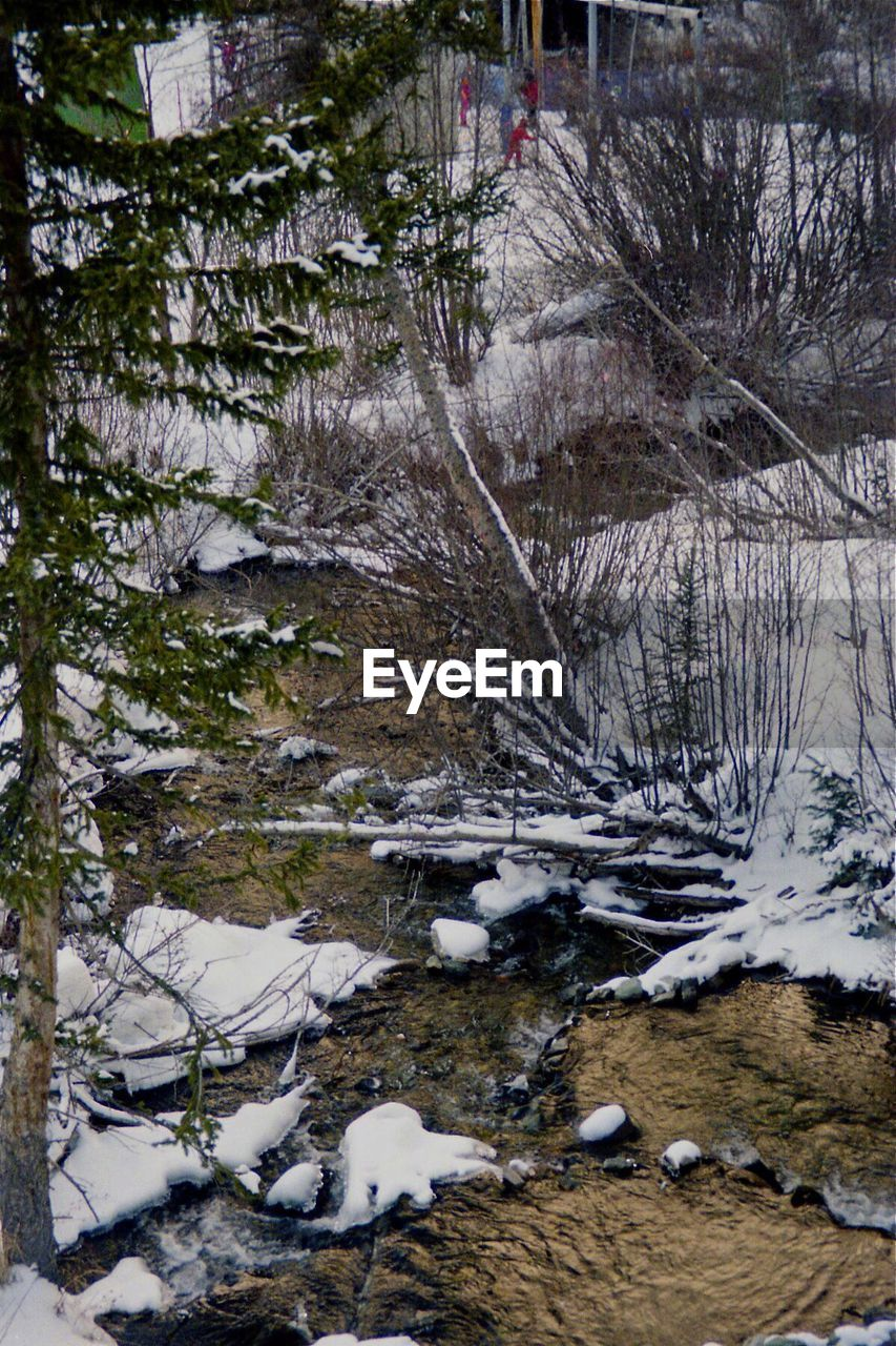 winter, snow, cold temperature, tree, nature, no people, tranquility, bare tree, day, outdoors, beauty in nature, water, landscape, forest, branch