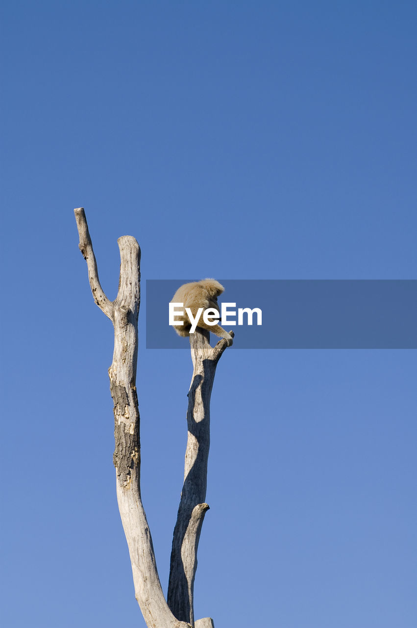 sky, blue, low angle view, copy space, clear sky, animal, tree, animal wildlife, animal themes, animals in the wild, vertebrate, branch, plant, no people, bird, nature, day, perching, one animal, outdoors