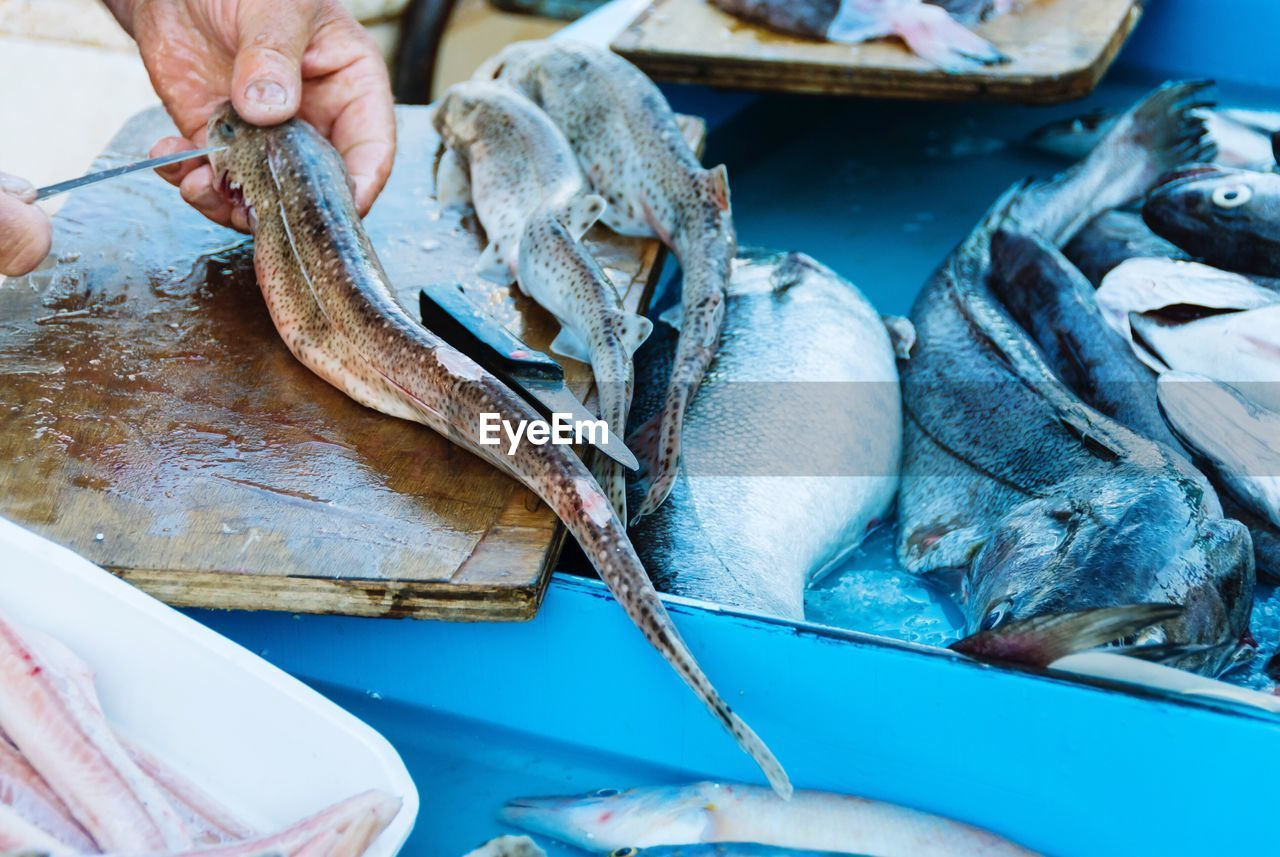 human hand, food, fish, real people, one person, hand, vertebrate, freshness, food and drink, healthy eating, seafood, human body part, raw food, wellbeing, animal, kitchen knife, close-up, retail, cutting, holding, preparing food, outdoors, fish market, finger, fishing industry