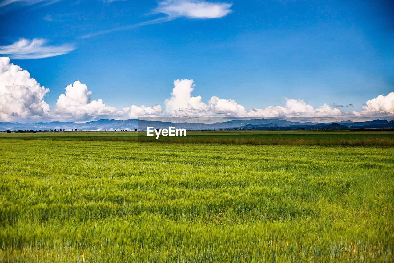 field, sky, landscape, green color, nature, beauty in nature, cloud - sky, scenics, tranquil scene, grass, day, agriculture, tranquility, no people, growth, mountain, rural scene, outdoors