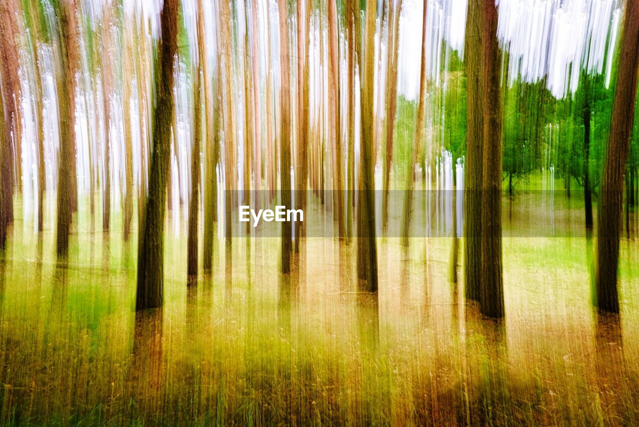 Blurred motion of trees on field