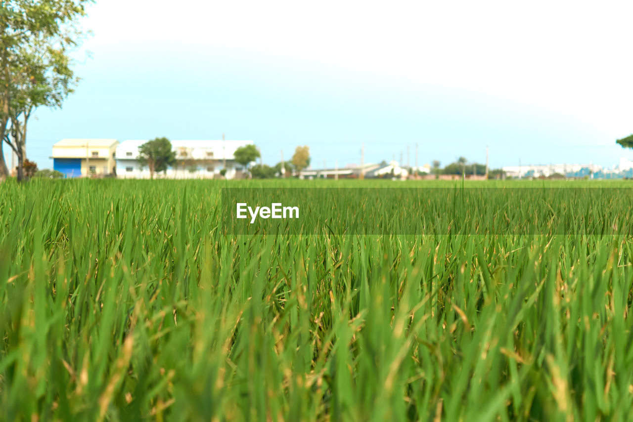 plant, land, field, landscape, sky, growth, rural scene, green color, environment, agriculture, nature, crop, grass, day, built structure, architecture, farm, selective focus, tranquility, building exterior, no people, outdoors