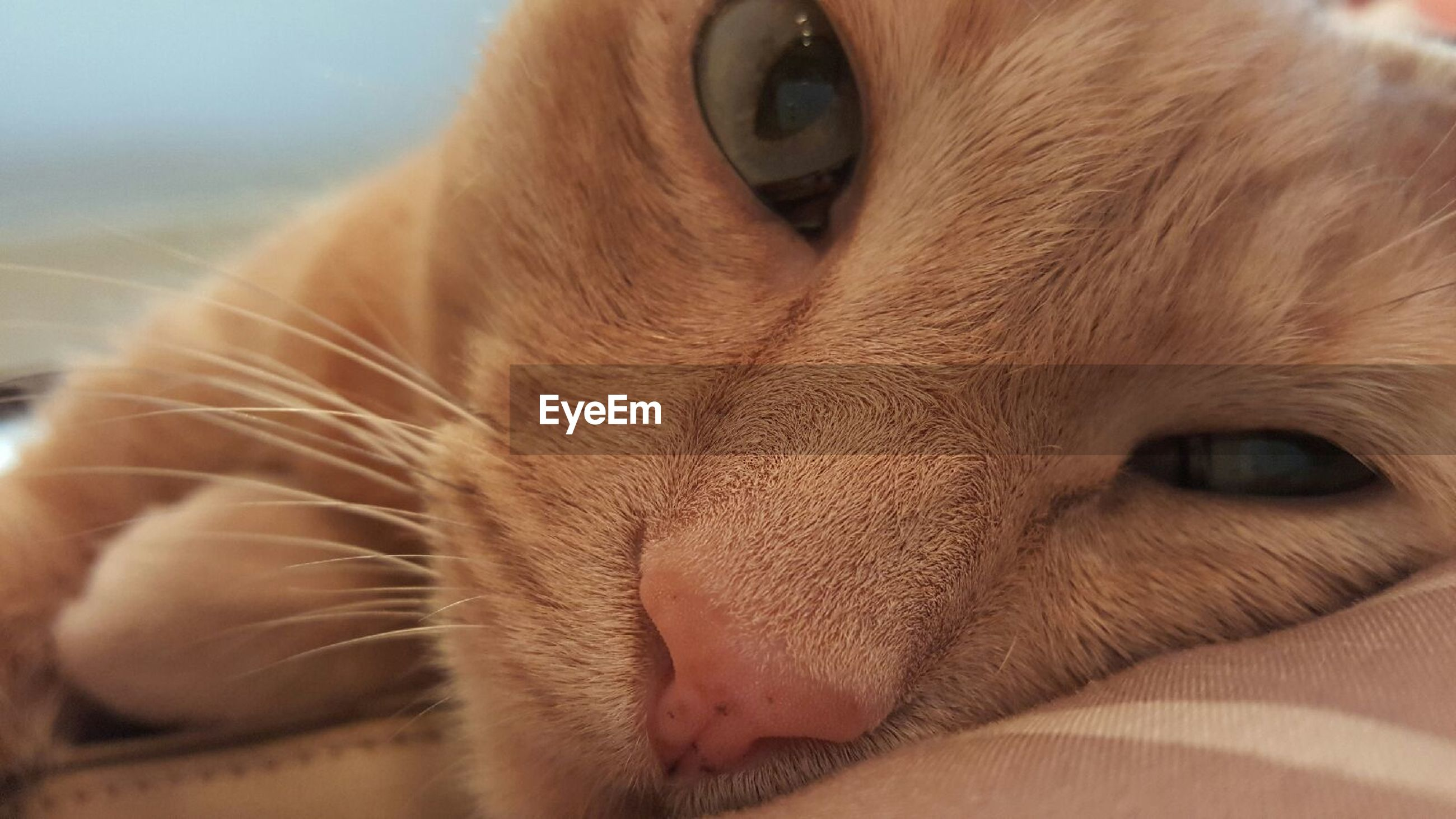 animal themes, domestic animals, one animal, mammal, pets, domestic cat, cat, feline, whisker, animal head, close-up, indoors, animal body part, portrait, animal eye, looking at camera, focus on foreground, relaxation, brown