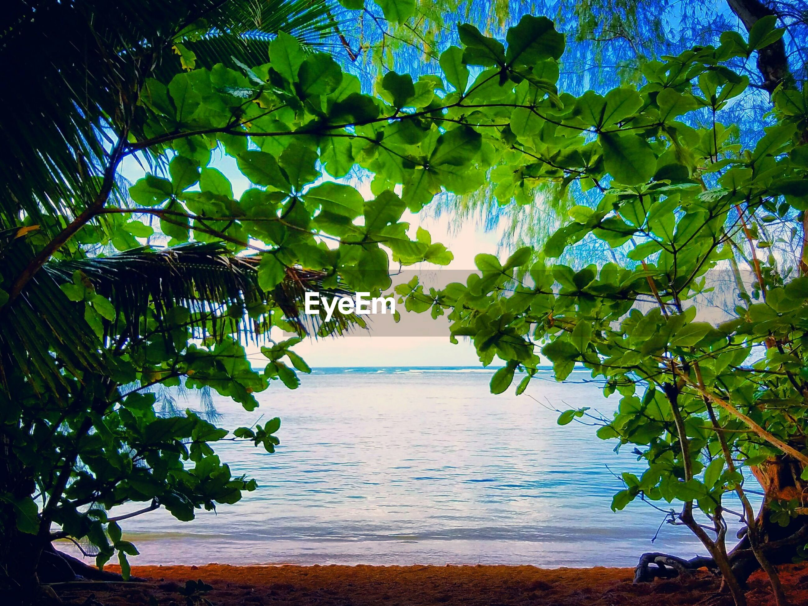 SCENIC VIEW OF TREES BY SEA