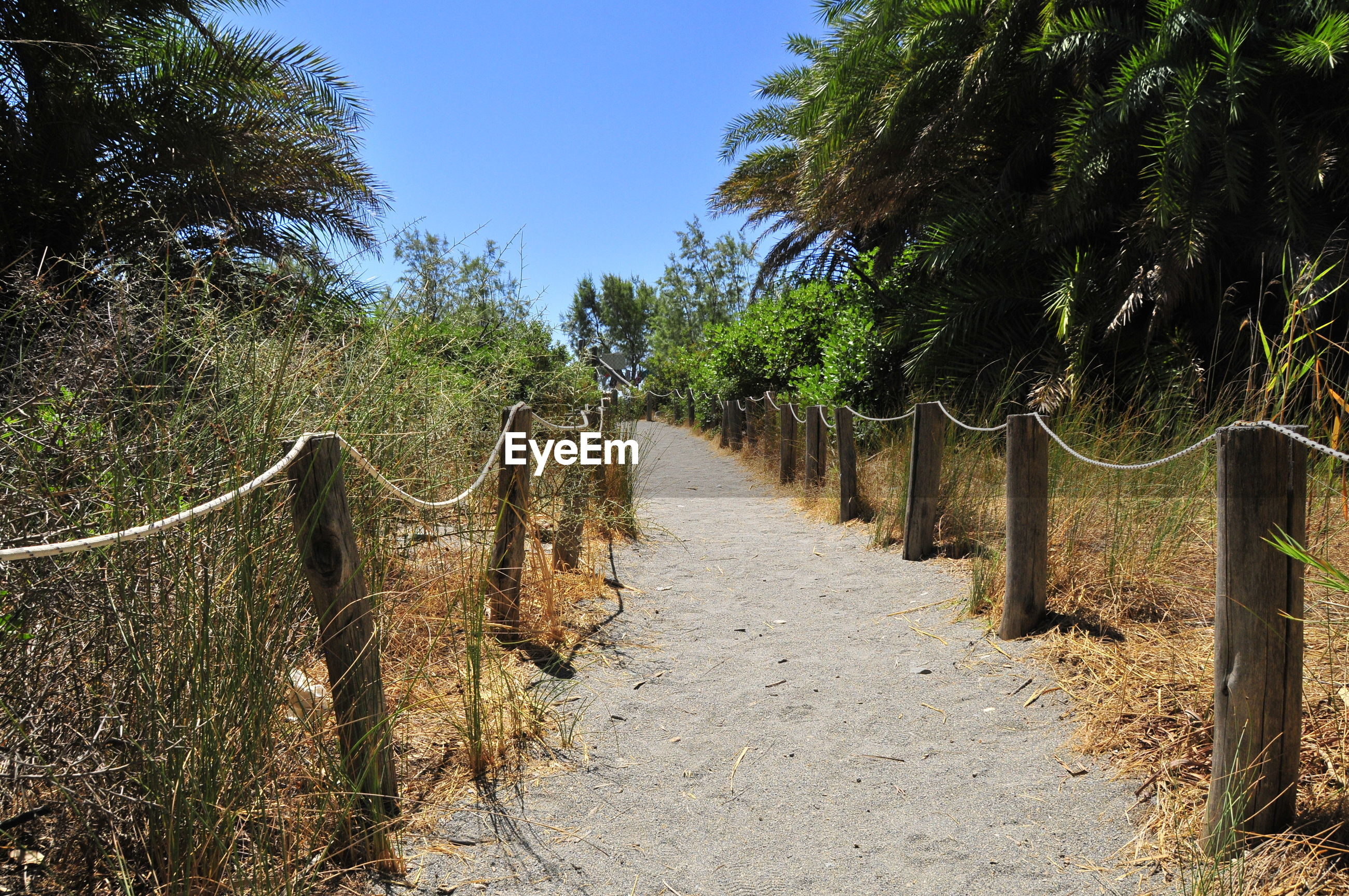Empty footpath amidst trees