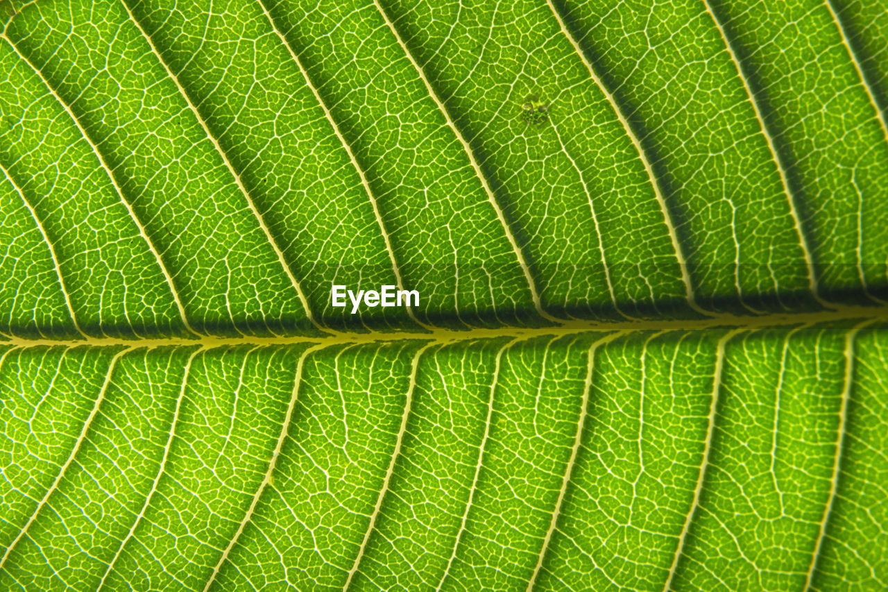 leaf, plant part, green color, full frame, backgrounds, close-up, leaf vein, natural pattern, no people, nature, plant, beauty in nature, textured, pattern, growth, macro, outdoors, day, directly above, freshness, leaves, palm leaf