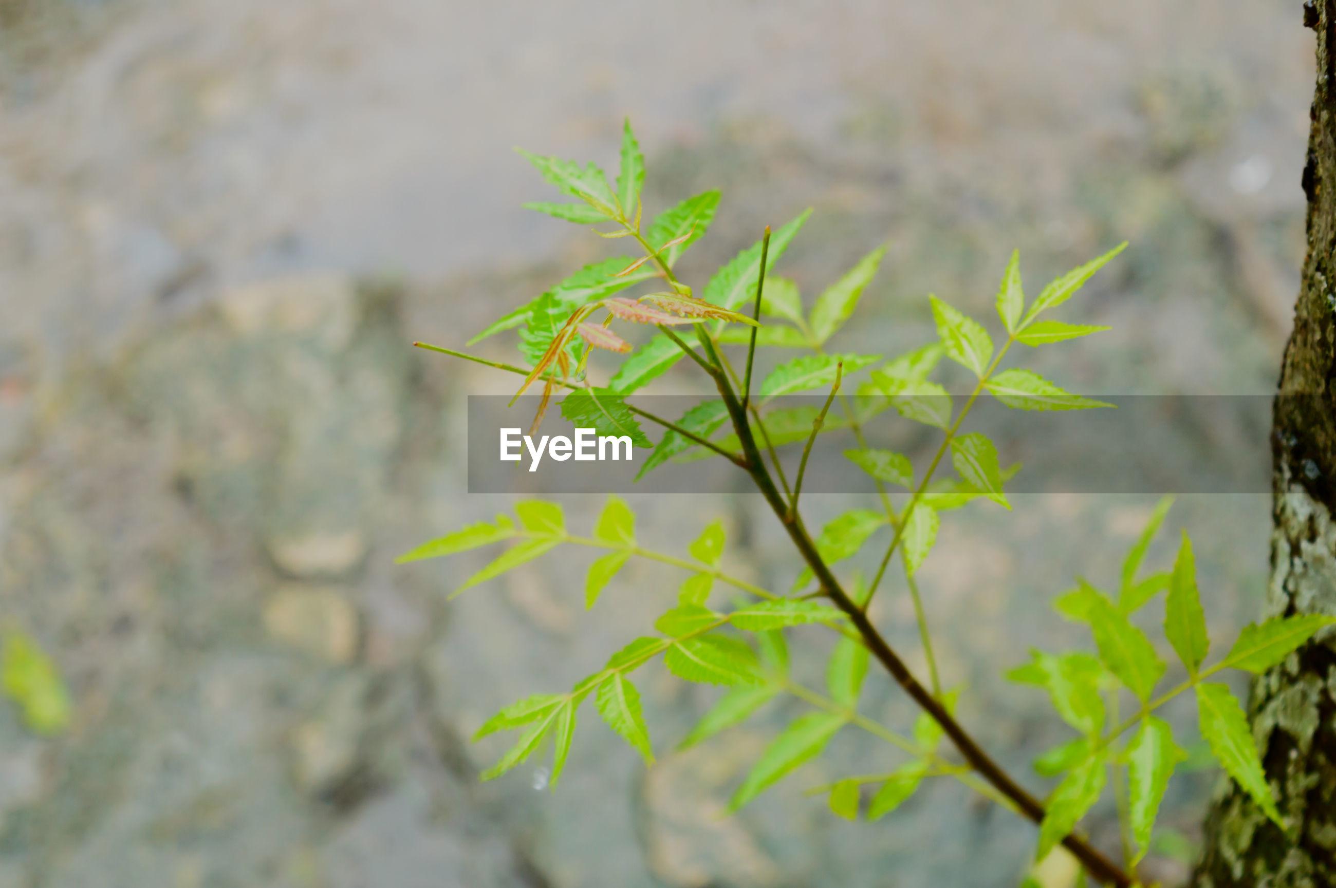 CLOSE-UP OF FRESH PLANT