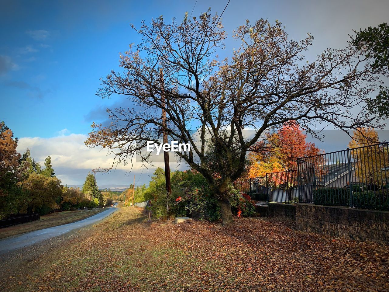 tree, plant, sky, autumn, nature, change, beauty in nature, no people, growth, direction, road, cloud - sky, day, the way forward, outdoors, transportation, tranquility, branch, barrier, scenics - nature, fall
