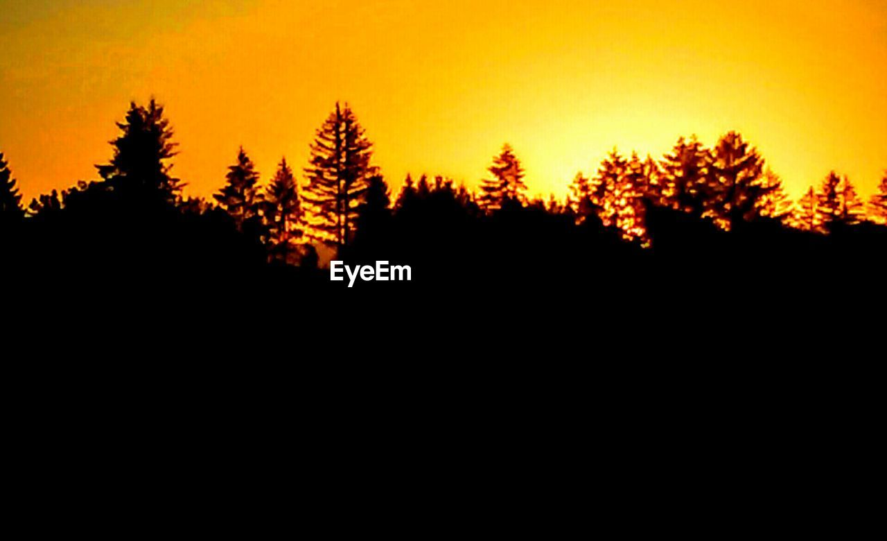 tree, silhouette, forest, nature, sunset, no people, pine tree, scenics, landscape, beauty in nature, sky, outdoors, day