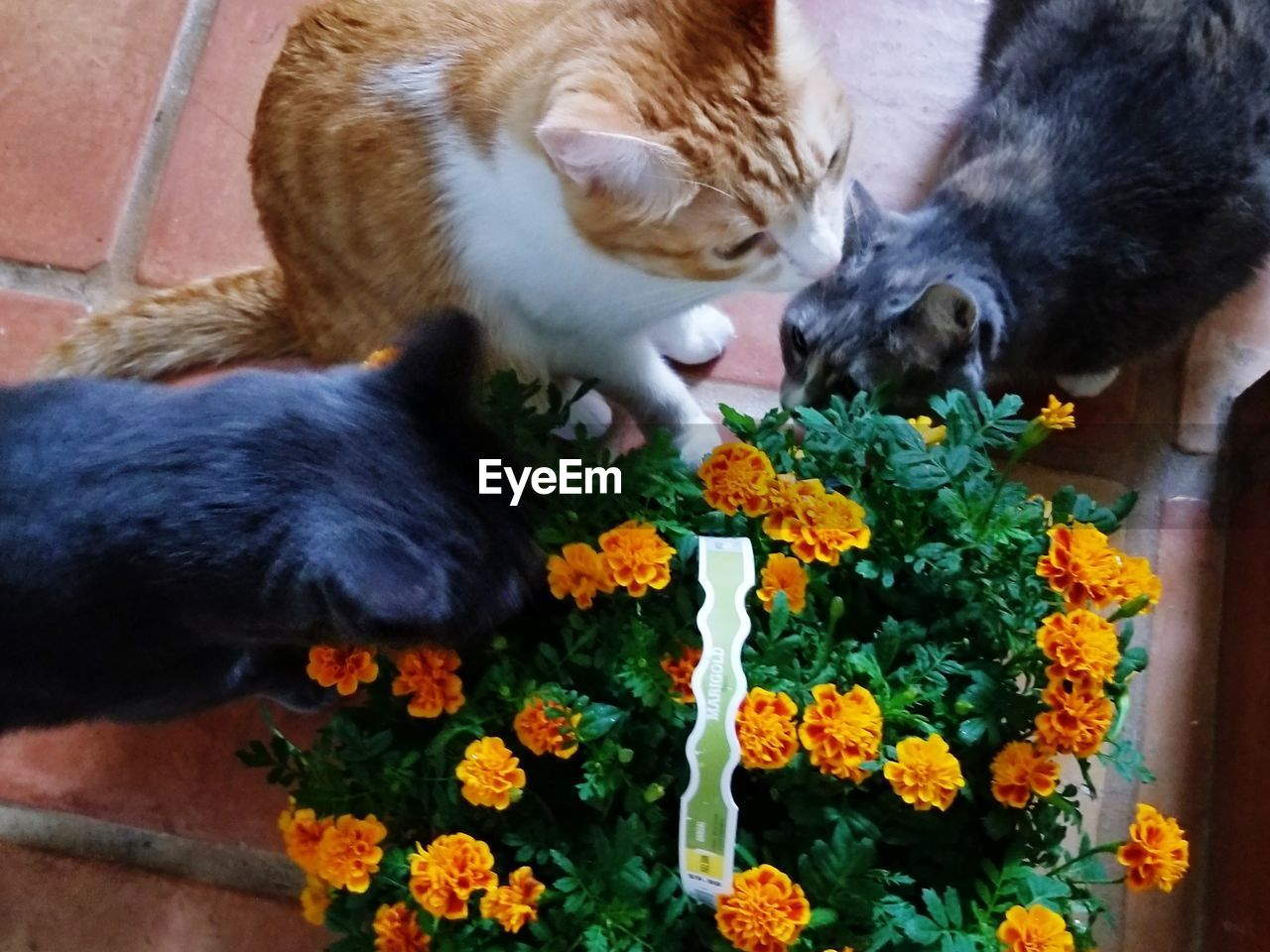 mammal, animal, animal themes, flowering plant, flower, domestic, vertebrate, pets, domestic animals, feline, plant, cat, domestic cat, one animal, nature, no people, high angle view, freshness, whisker