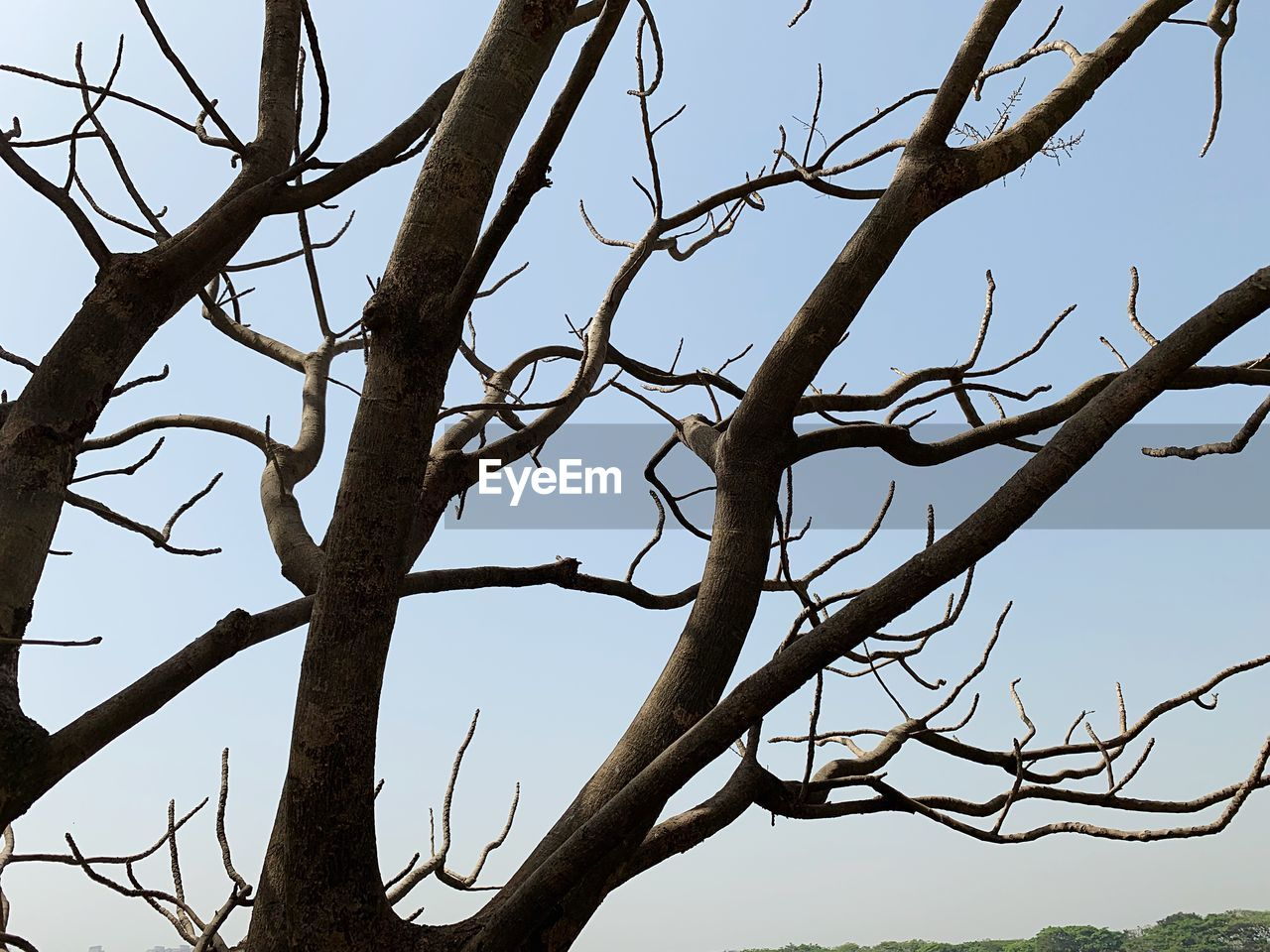 tree, branch, sky, plant, bare tree, low angle view, clear sky, no people, nature, day, tranquility, outdoors, beauty in nature, growth, twig, scenics - nature, trunk, animals in the wild, group of animals, animal wildlife