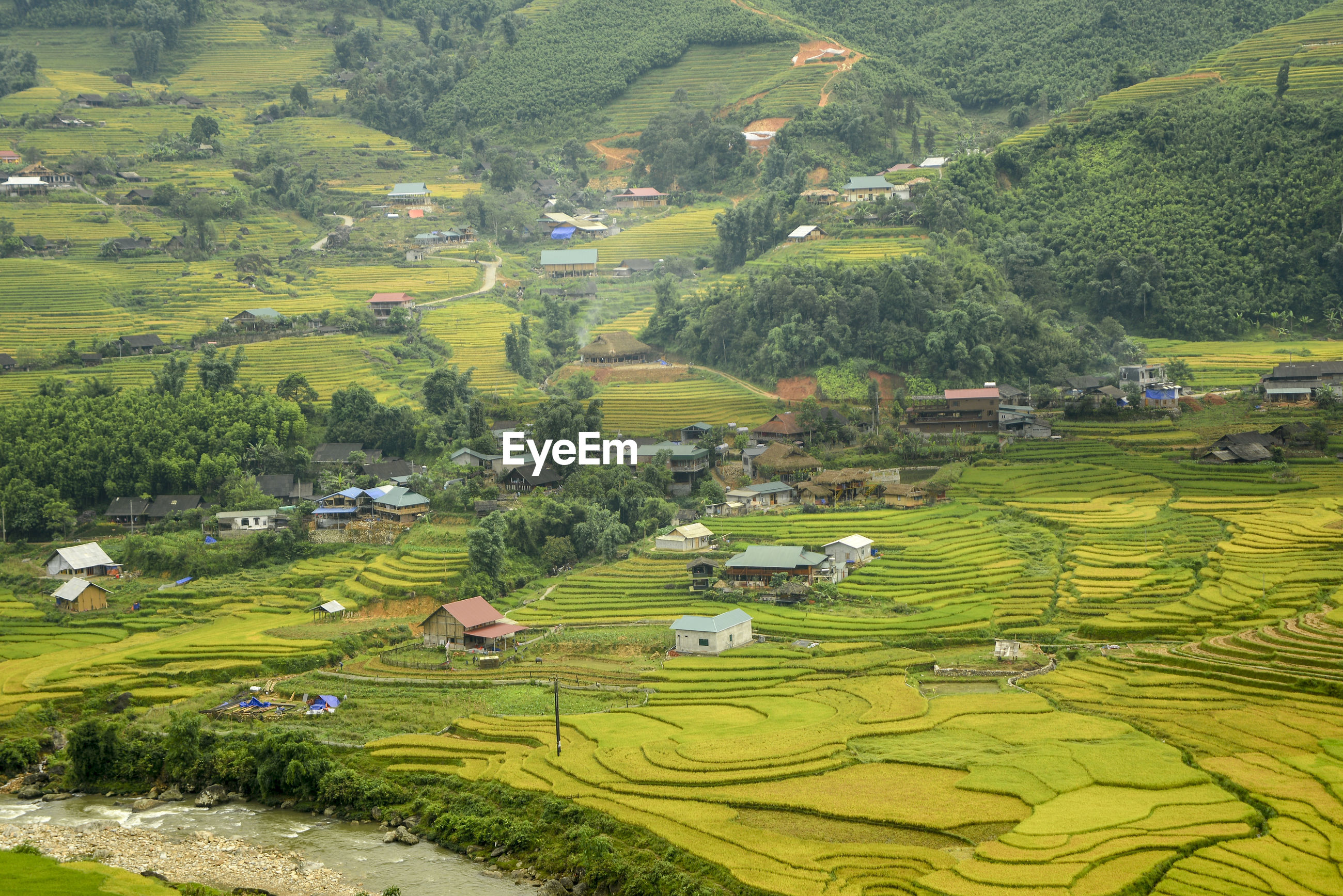 SCENIC VIEW OF AGRICULTURAL FIELD BY HOUSES AND TREE