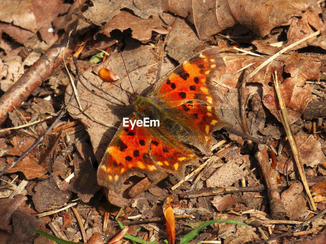 animal themes, leaf, animals in the wild, one animal, nature, wildlife, change, day, outdoors, insect, no people, field, animal wildlife, beauty in nature, animal markings, close-up, fragility