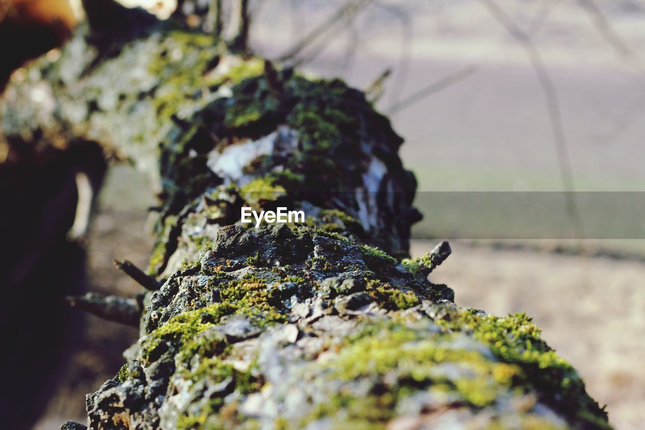selective focus, close-up, moss, no people, rock, plant, solid, day, nature, rock - object, textured, growth, outdoors, focus on foreground, rough, food, food and drink, tree, wood - material, fungus, lichen