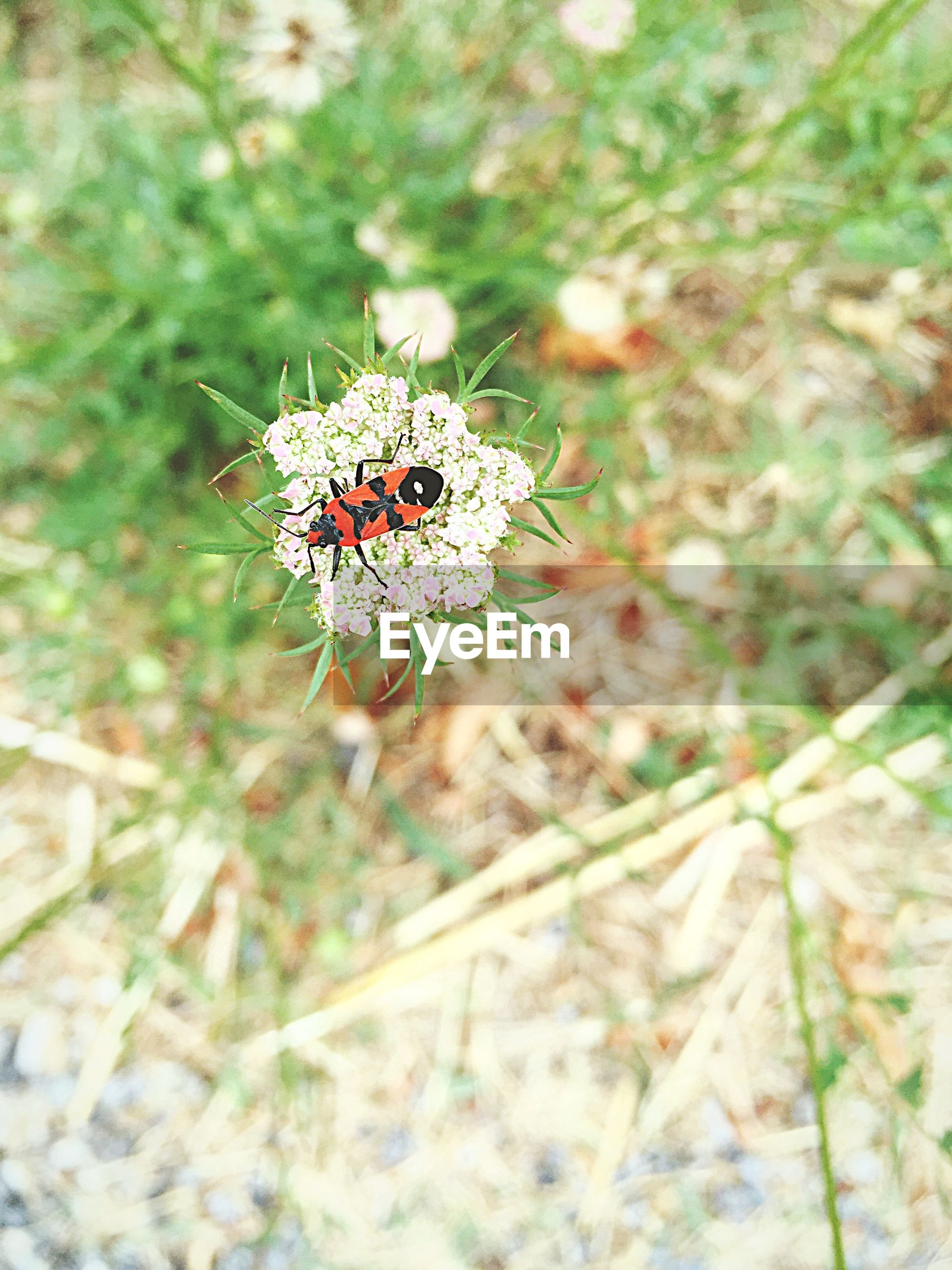 High angle view of bug on flower outdoors