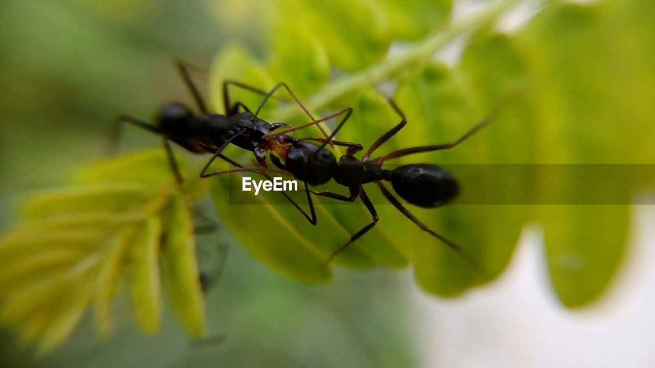 insect, green color, animals in the wild, close-up, animal themes, no people, leaf, nature, outdoors, day