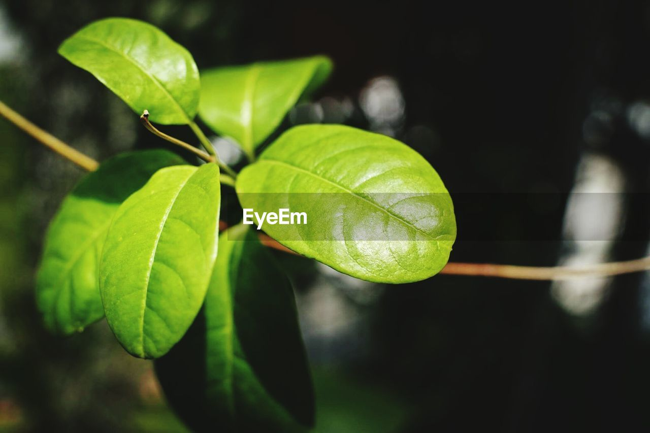 leaf, green color, close-up, nature, growth, plant, focus on foreground, no people, day, freshness, outdoors, fragility, beauty in nature