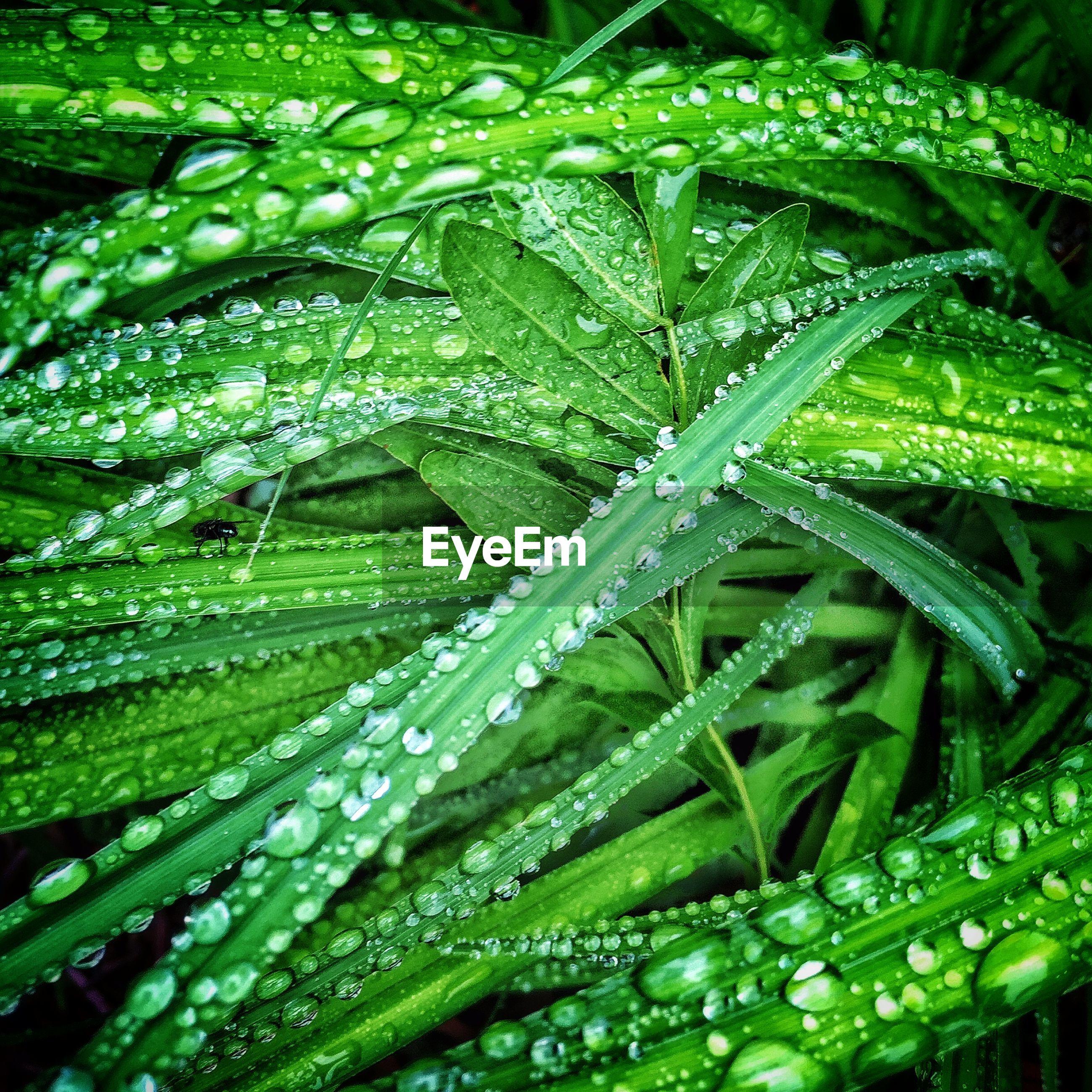 Full frame shot of wet leaves in yard