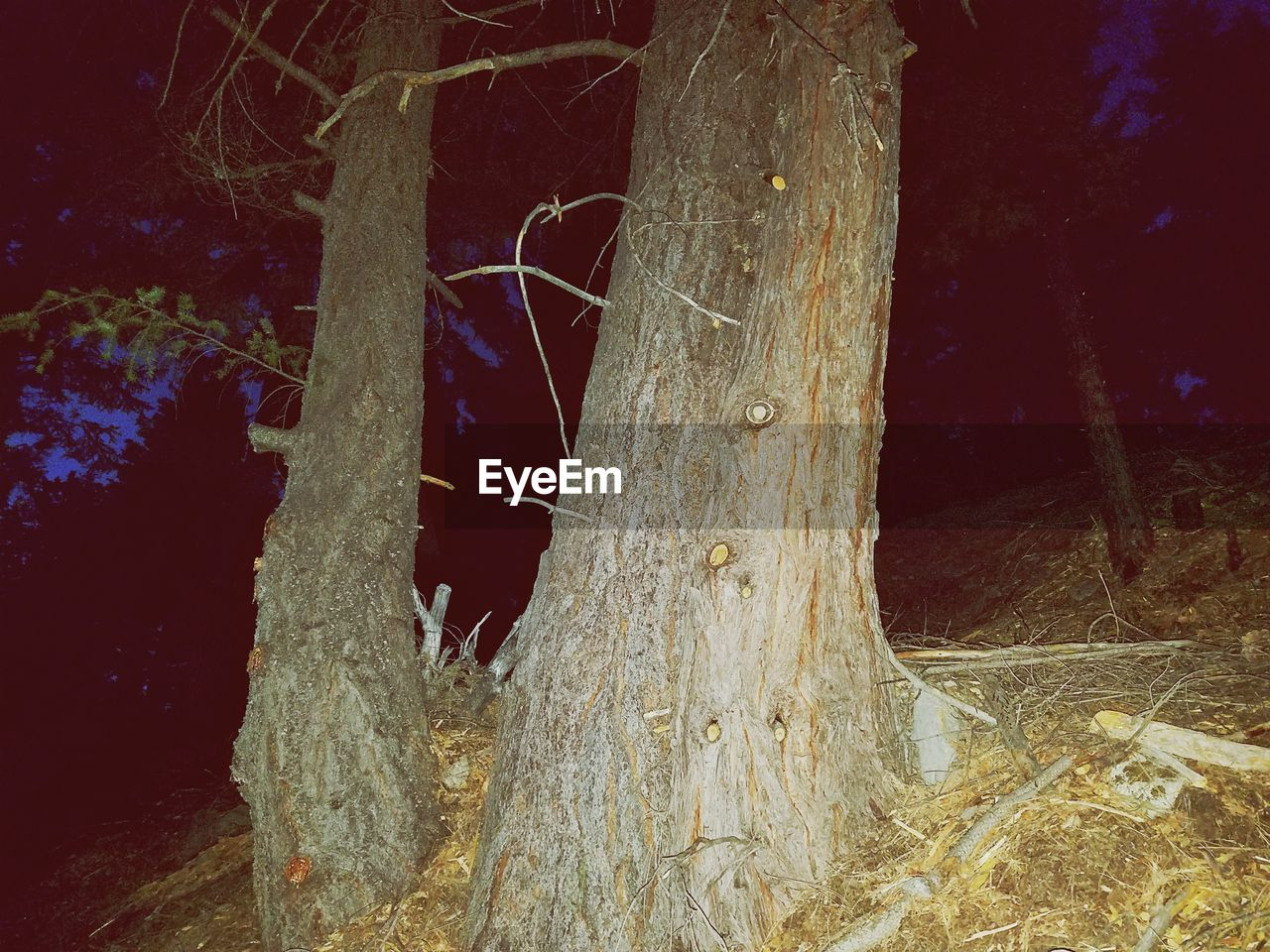 tree, plant, tree trunk, no people, trunk, night, nature, close-up, wood - material, growth, outdoors, forest, tranquility, beauty in nature, land, complexity, branch, plant part, wood, icicle