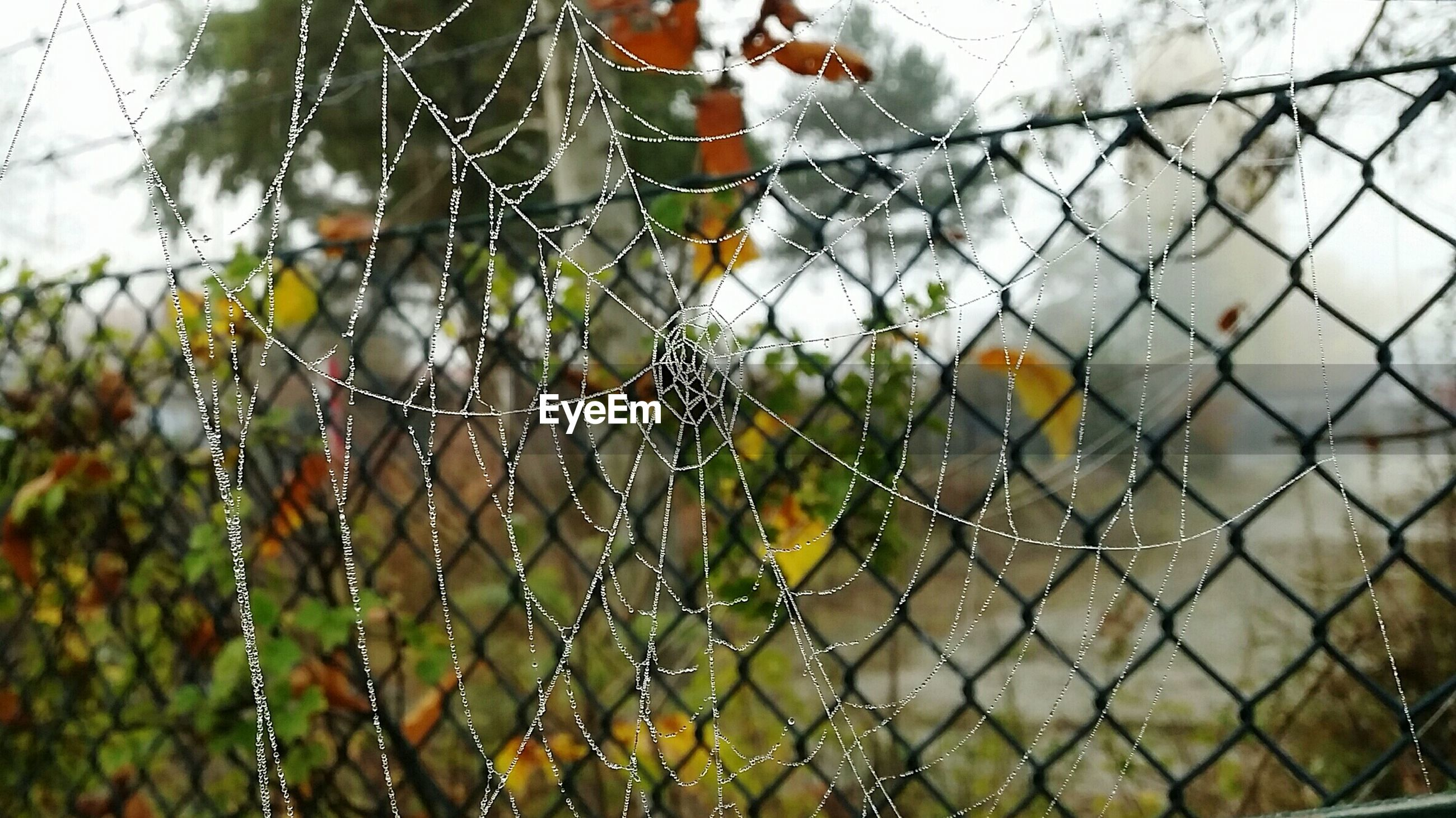 Close-up of frosty spider web against fence during autumn