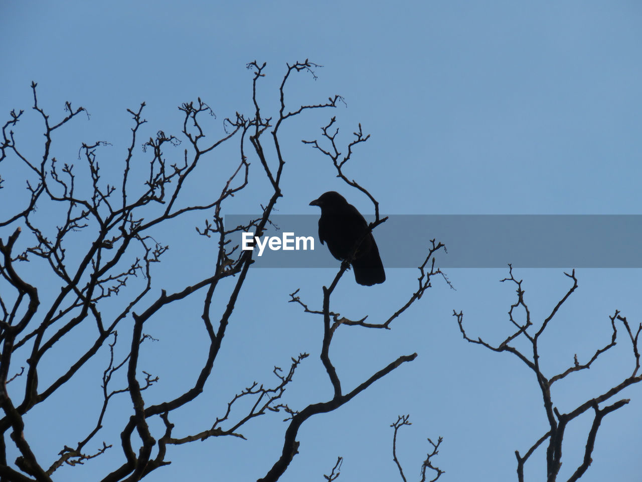 bird, one animal, animal themes, animals in the wild, branch, low angle view, clear sky, nature, perching, outdoors, animal wildlife, no people, tree, day, bare tree, full length, beauty in nature, sky, bird of prey