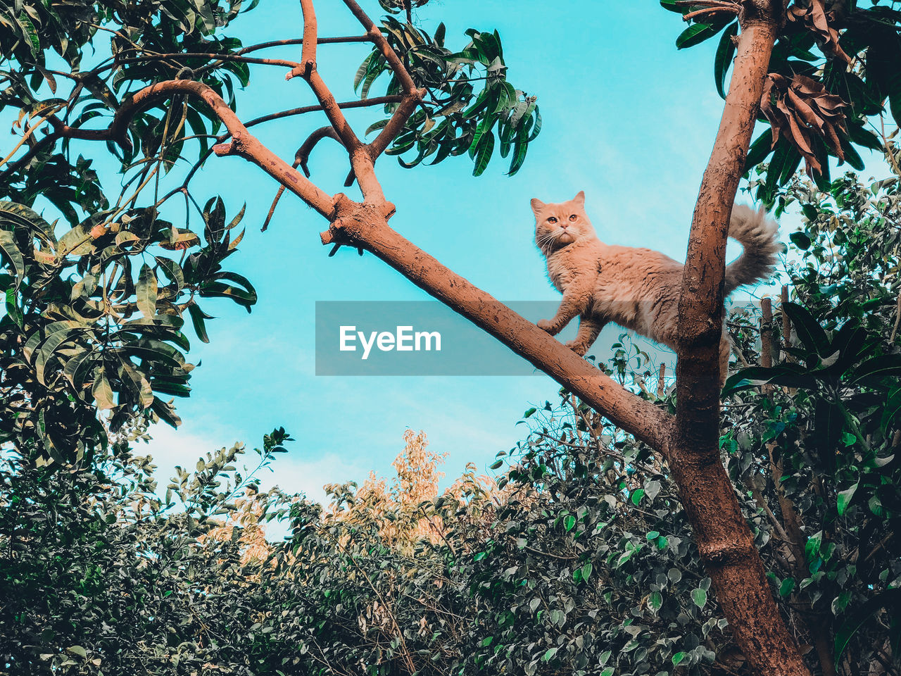 Low Angle View Of Cat Standing On Tree Against Sky