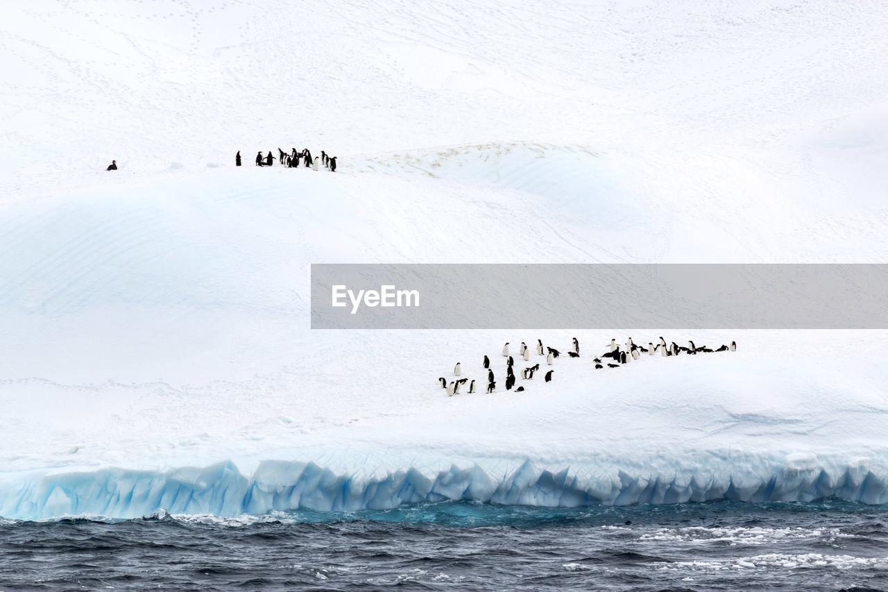 FLOCK OF BIRDS IN SEA DURING WINTER