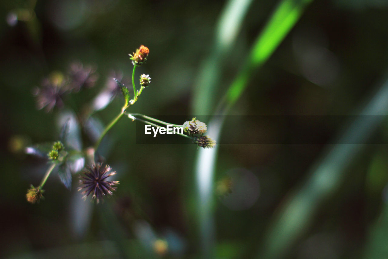 insect, one animal, plant, flower, nature, animal themes, animals in the wild, no people, growth, selective focus, fragility, outdoors, day, close-up, beauty in nature, freshness