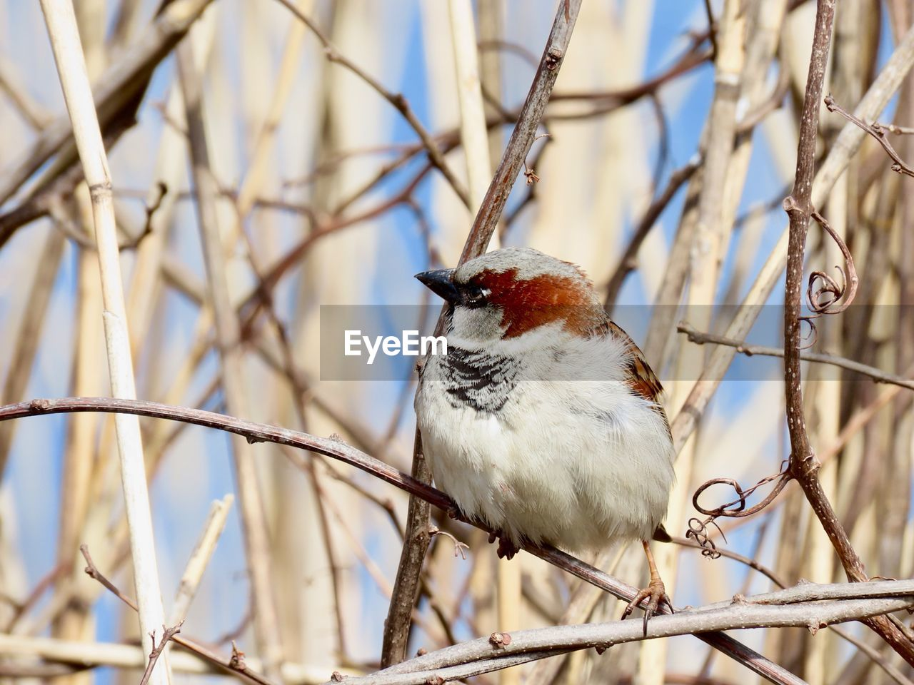 bird, perching, vertebrate, animal, animal themes, one animal, branch, animal wildlife, animals in the wild, focus on foreground, tree, no people, bare tree, day, plant, low angle view, close-up, outdoors, nature, selective focus