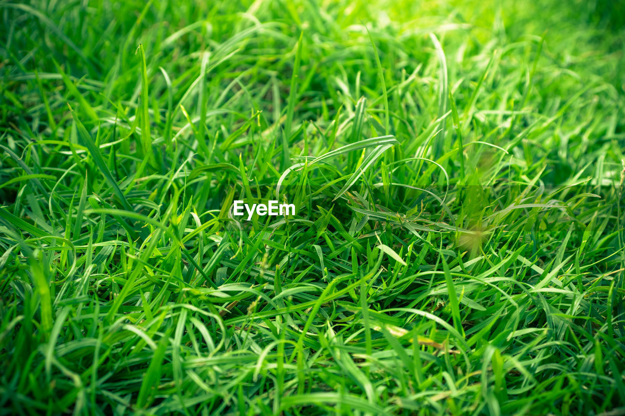 green color, plant, grass, growth, full frame, backgrounds, nature, land, field, selective focus, no people, close-up, beauty in nature, day, outdoors, tranquility, plant part, freshness, lush foliage, foliage, blade of grass