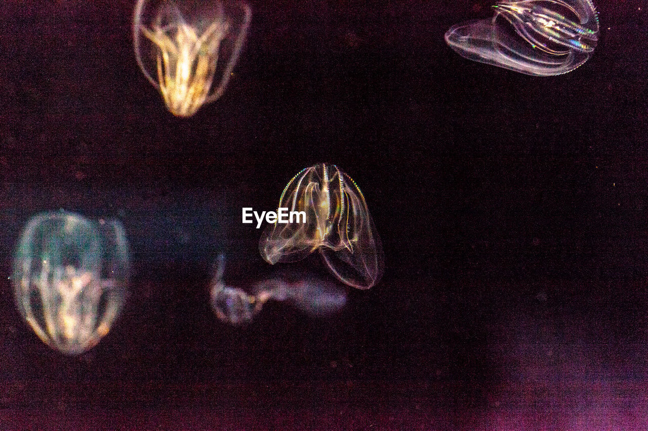 jellyfish, underwater, sea life, smooth, water, swimming, close-up, no people, floating in water, indoors, undersea, day
