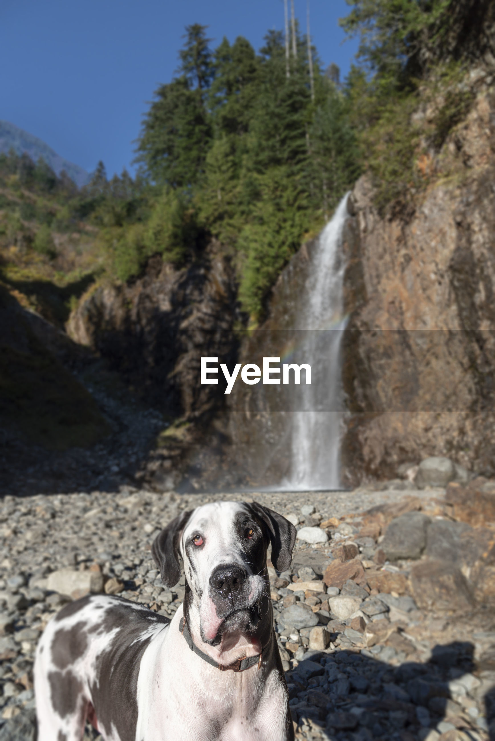 Portrait of dog against waterfall in forest
