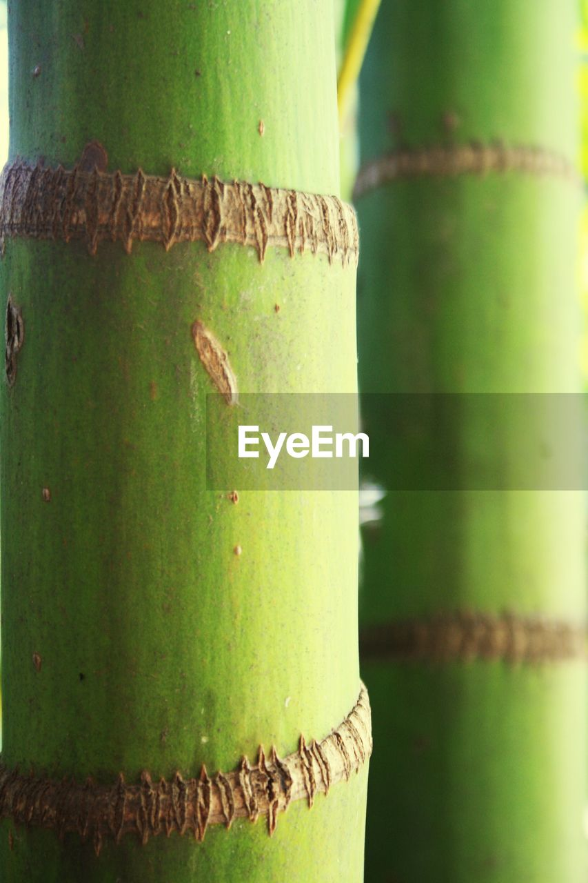 green color, close-up, no people, focus on foreground, day, textured, outdoors, nature